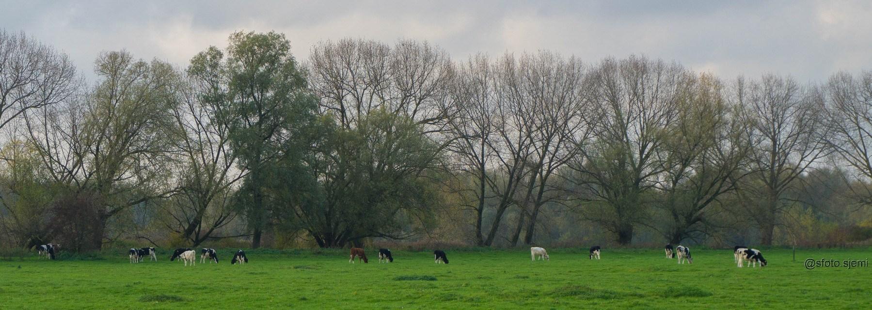 Stadsblokken-Meinerswijk Arnhem